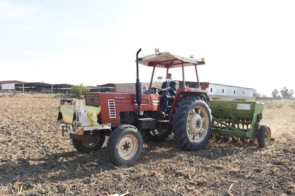 Başkan Bozdoğan, ata tohumu kunduru buğdayını toprakla buluşturdu