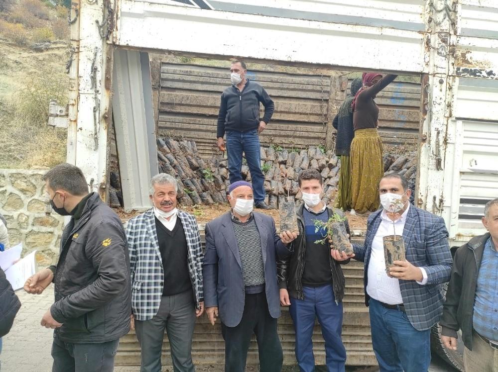 Sason'da çiftçilere 5 bin fıstık fidanı dağıtıldı