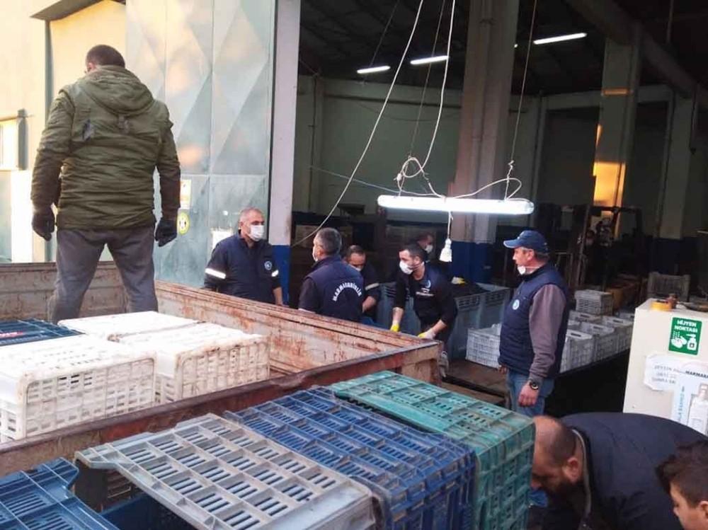 Erdek'te zeytin alımları sona erdi