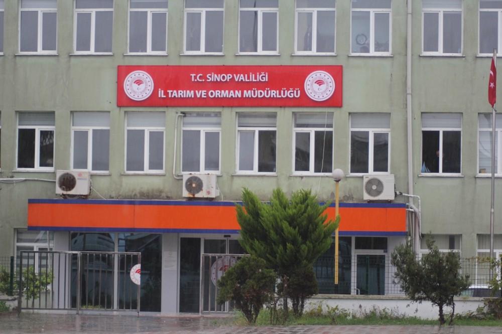 Sinop'da arıcılık desteklemesi başvuruları devam ediyor
