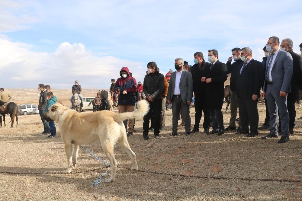 Sivas'ta küçükbaş hayvan yetiştiricileri birleşti, hedef 100 bin koyun