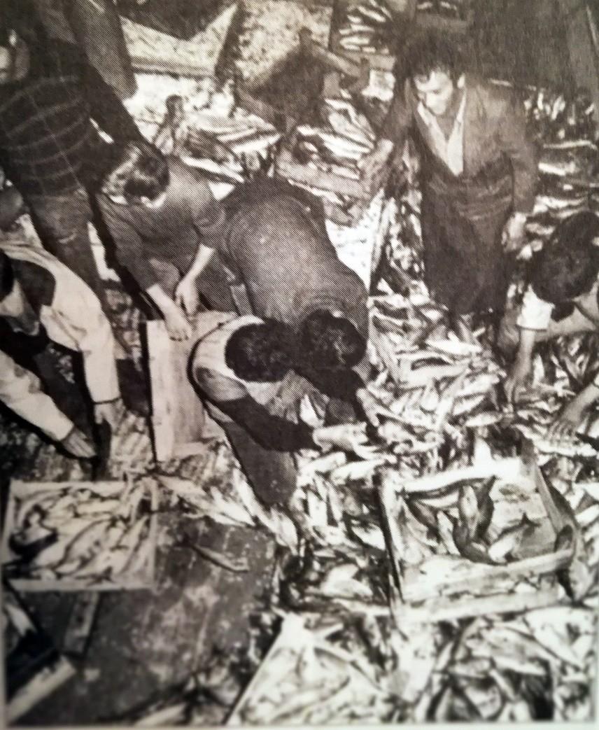 1.000 TON HAMSİ TUTULUNCA HALKA BEDAVA DAĞITILDI / 12 Aralık 1953 tarihli bir habere göre ise İstanbul'da 3 günde 500 ton uskumru, 1.000 ton hamsi avlandı. Haberde ayın 10'unda uskumrunun kilosu 50, hamsinin de 5 kuruştan satıldı, bazı yerlerde de halka bedava dağıtıldı yazıyor.