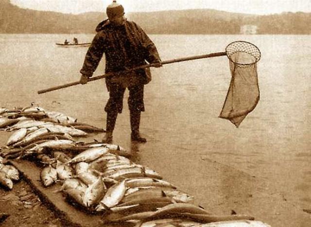 TORİKLERİ KIYIDAN TOPLAYAN BALIKÇI / 1950'li yıllar İstanbul'da torik balıklarını kepçe ile toplayan bir balıkçıyı görüyoruz. Şimdi bir balık tezgahında bile o kaldırıma atılan balıklar kadar balık toplandığını görmüyoruz.