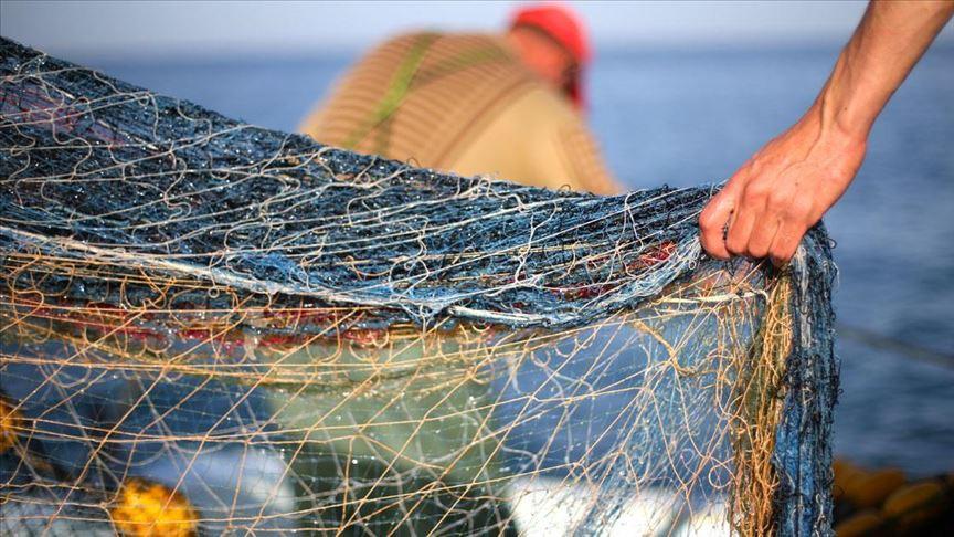 1988 / Kayıtlara bakıldığında 1988 yılında toplam 480 bin ton balık avcılığı yapıldığını, bunun 40 bin tonunu tatlı su üretim ve avcılığının oluşturduğunu, 310 bin ton ile toplam balık avcılığımızın yaklaşık üçte ikisini hamsi balığının meydana getirdiğini görüyoruz.