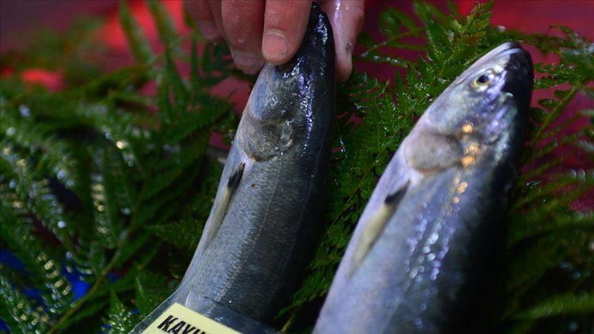 2000 / 2000'li yılların başında kişi başına 8 kilogram balık tüketilirken bu miktar gittikçe azalarak günümüzde 5-6 kilogramlara kadar düştü.