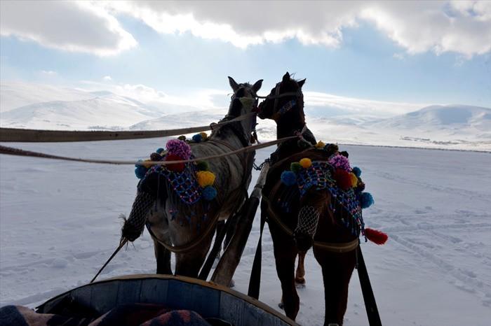 KARS'IN MEŞHUR ATLARI Kars'ın yılkı atları çok meşhur. Tabii onlar özgürce dağlarda dolaşıyorlar. Fakat ulaşımda kullanılan kızakları sürükleyen atları, ayrıca bu atların bakımlı olmaları, takılan rengarenk süsleri çok çekici görüntülere sahne olabiliyor.