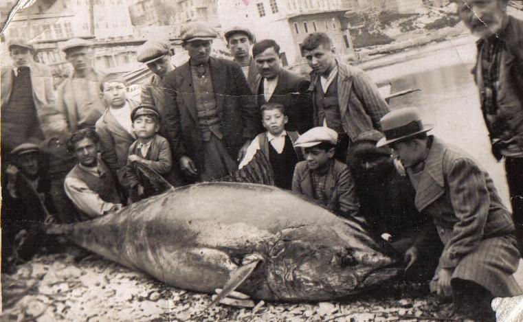 Geçtiğimiz yüzyılda orkinoslar İstanbul Boğazı'nda sıkça avlanır, balıkçılar teknelerine attıkları balıkları kıyıya vardıklarında yan yana dizer, önünde gururla poz verirlerdi. Balıkhaneleri dolduran orkinoslar mekanı bayram yerine çevirirdi.