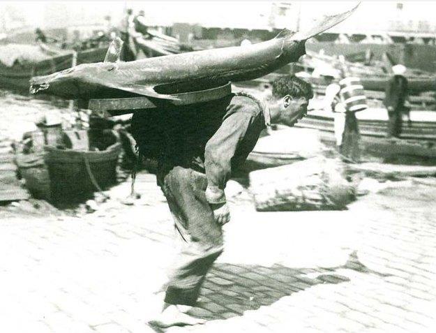 Bazen de sırtladığı balıklarla şehrin sokaklarında dolaşan hamallar göze çarpardı. Orkinos balığın bereketinin simgesi gibiydi.