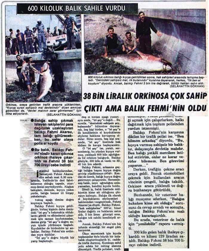 GAZETELERİN 3'ÜNCÜ SAYFALARI ORKİNOS AKINI HABERLERİ İLE DOLU Ulusal gazetelerin 3'üncü sayfaları yakalanan orkinosların sayısı ve büyüklüğü ile ilgili haber yaparlardı. ORKİNOS TUTAN ZENGİN OLURDU 18 Haziran 1981 Milliyet gazetesi 3'üncü sayfadan verdiği haberde sahile vuran 600 kiloluk orkinosa çok talip çıktığını ancak 38 bin 700 lirayı Samatyalı balıkçı Fehmi Akarsu'nun aldığı yazıyor.