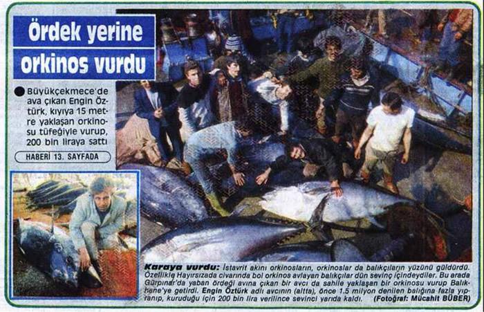 AVCI KIYIYA 15 METRE YAKLAŞAN ORKİNOSU TABANCASI İLE VURDU 25 Şubat 1986 Milliyet gazetesi 3'üncü sayfasında yer alan bir başka habere göre orkinos akını o kadar boldu ki avcı Engin Öztürk kıyıya yaklaşan balığı tabancası ile vurarak yakalamış ve bundan 200 bin lira para kazanmıştı.