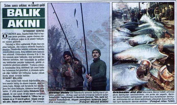 SİS BASTIRINCA ORKİNOSLAR KARAYA DOĞRU YÜZDÜ 08 Aralık 1986 tarihli Milliyet gazetesinde yer alan bir başka habere göre ise Marmara Denizi'nin sis kaplıyor ve sis orkinos sürüsünün kıyıya kadar sürüklüyor. Yakalanan tonlarca balık, hızlıca kıyıya çıkartılıp, bozulmamaları için buzla kaplanıyor. O kadar buz harcanıyor ki nerede ise buz bulmak karaborsaya düşüyor.