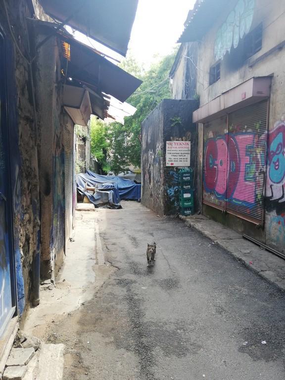 Sokağın pazar günü müdavimlerinden birileri de kedileri.