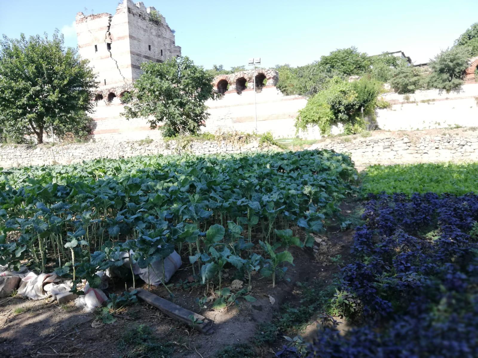 Bu efsanenin devamında Zeytinburnu sur dibinde ekilen bostanlar günümüzde hala yaşıyor.