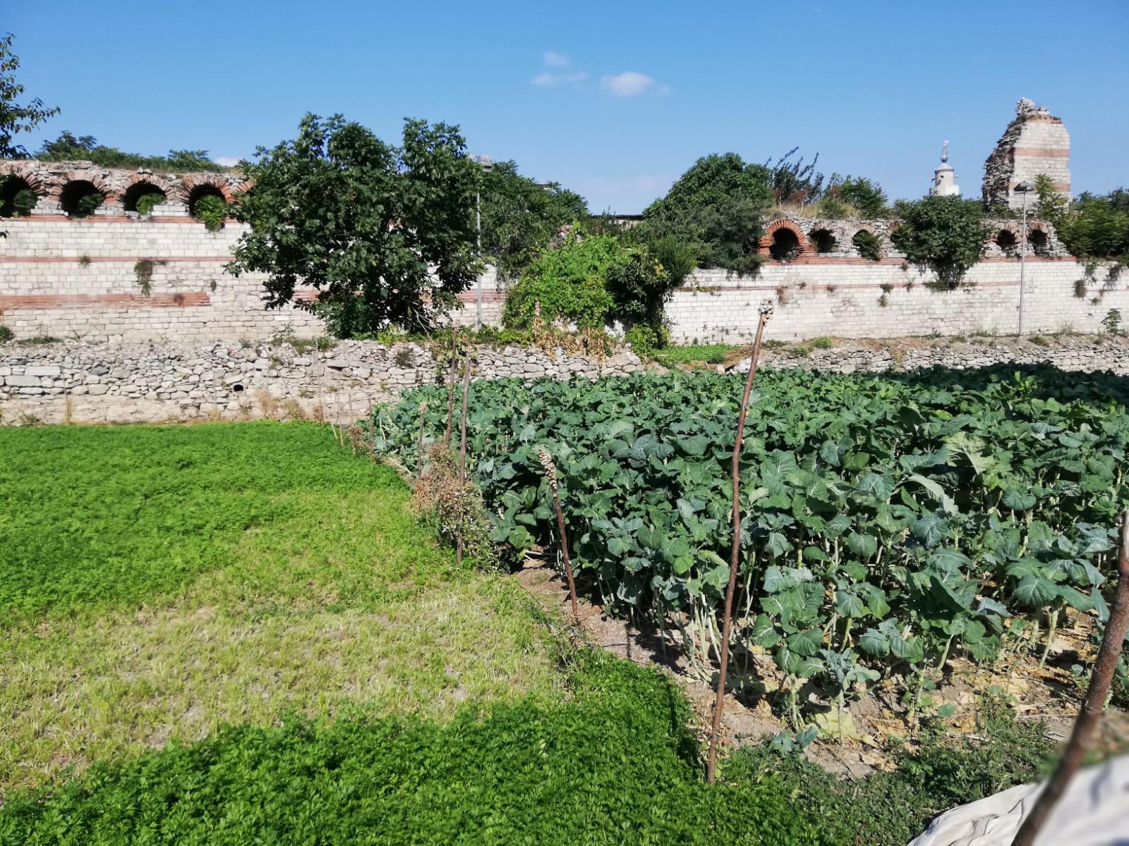 Şu anda bölgede yetişen salatalık ürünlerinin tadı hala damaklarda.