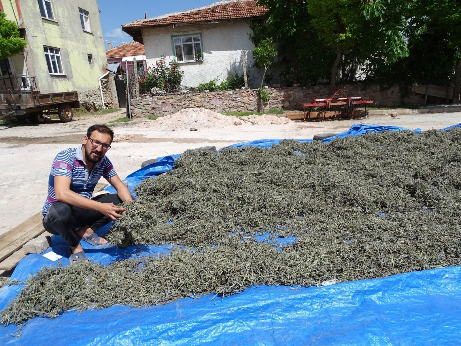 Hisarcık'ta üretilen adaçayını kooperatif pazarlayacak