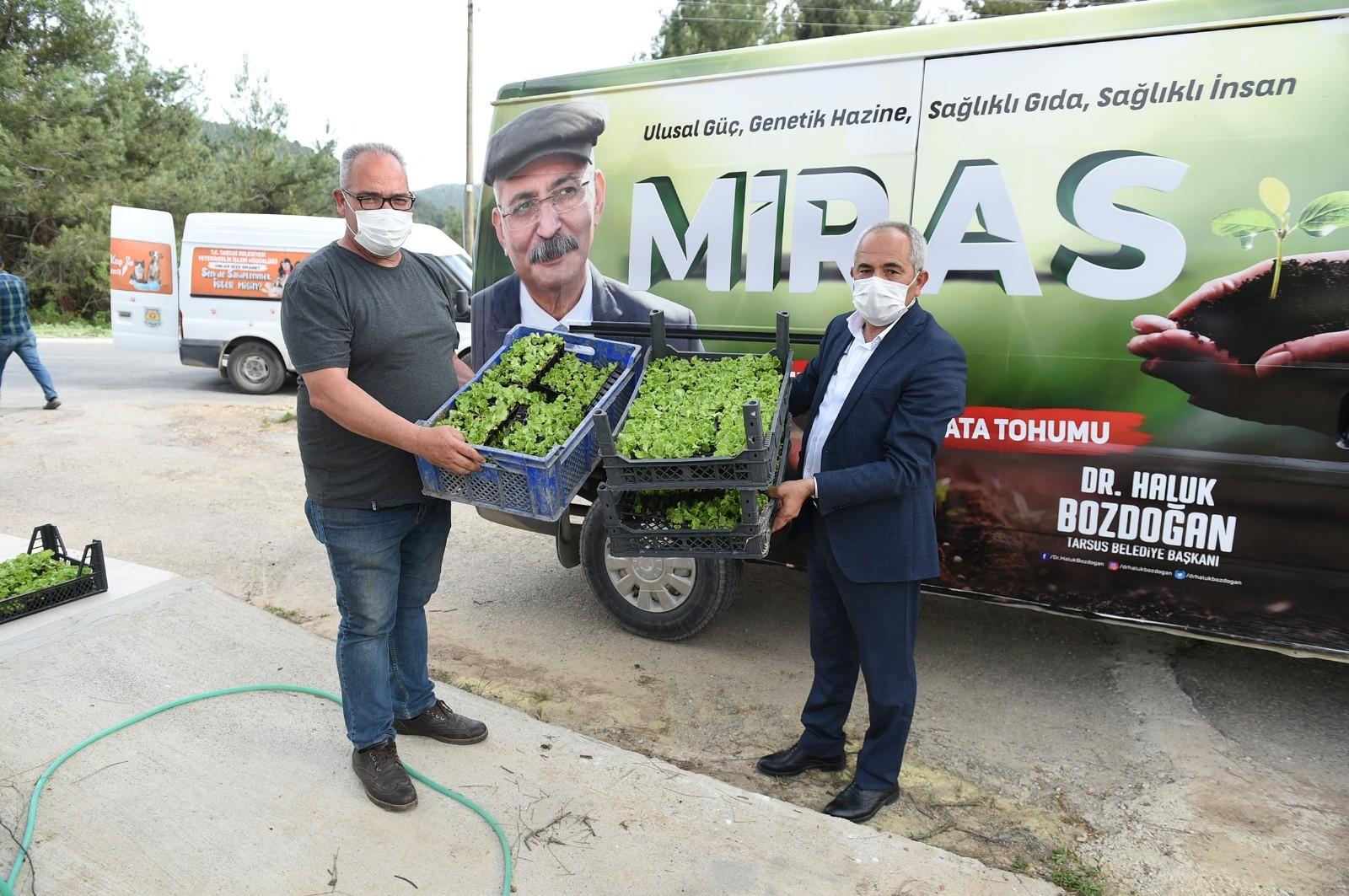 Ata tohumu ile yetiştirilen 300 bin adet fide üreticilere ücretsiz dağıtıldı