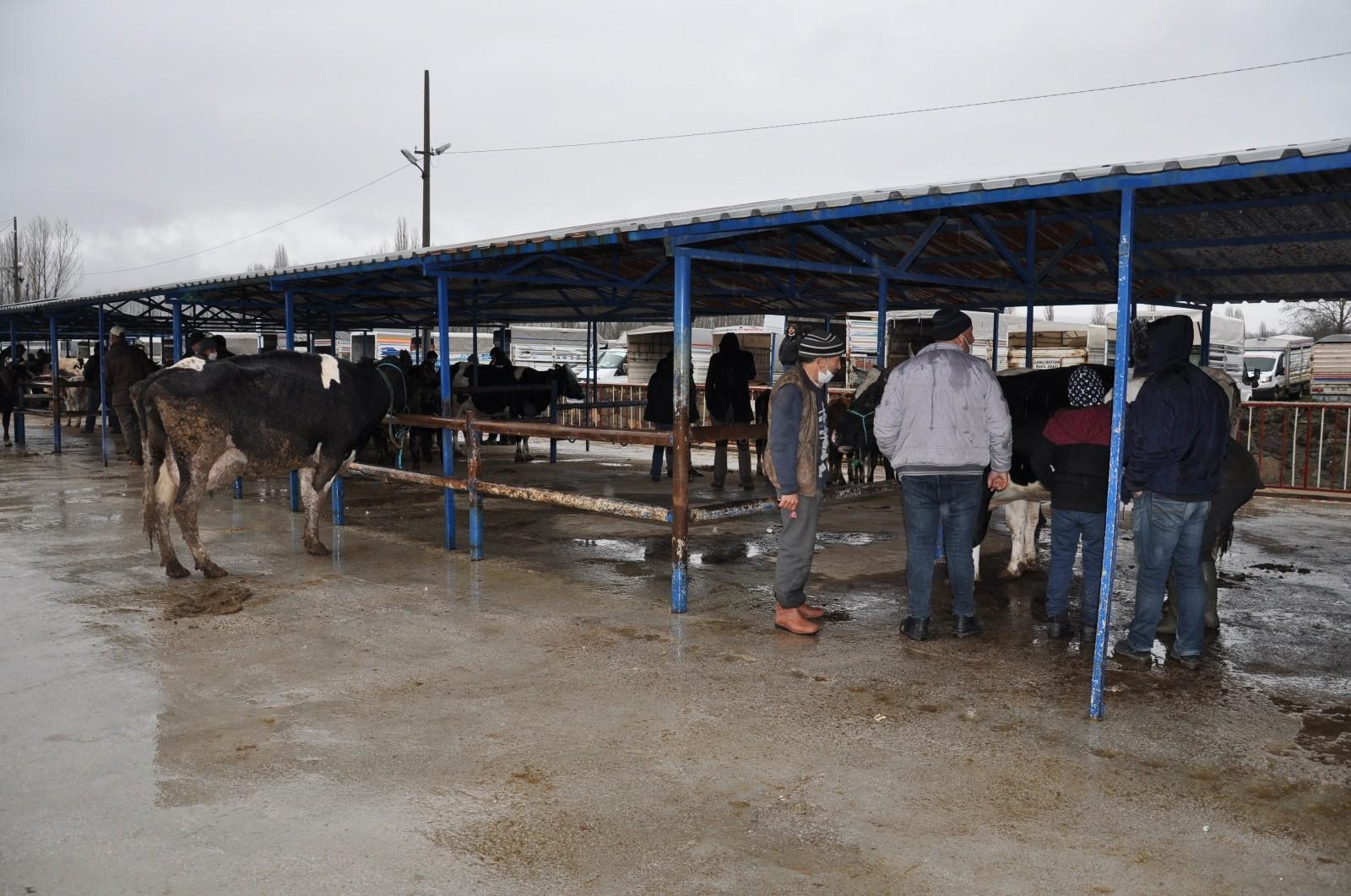 Canlı hayvan pazarı yeniden açıldı
