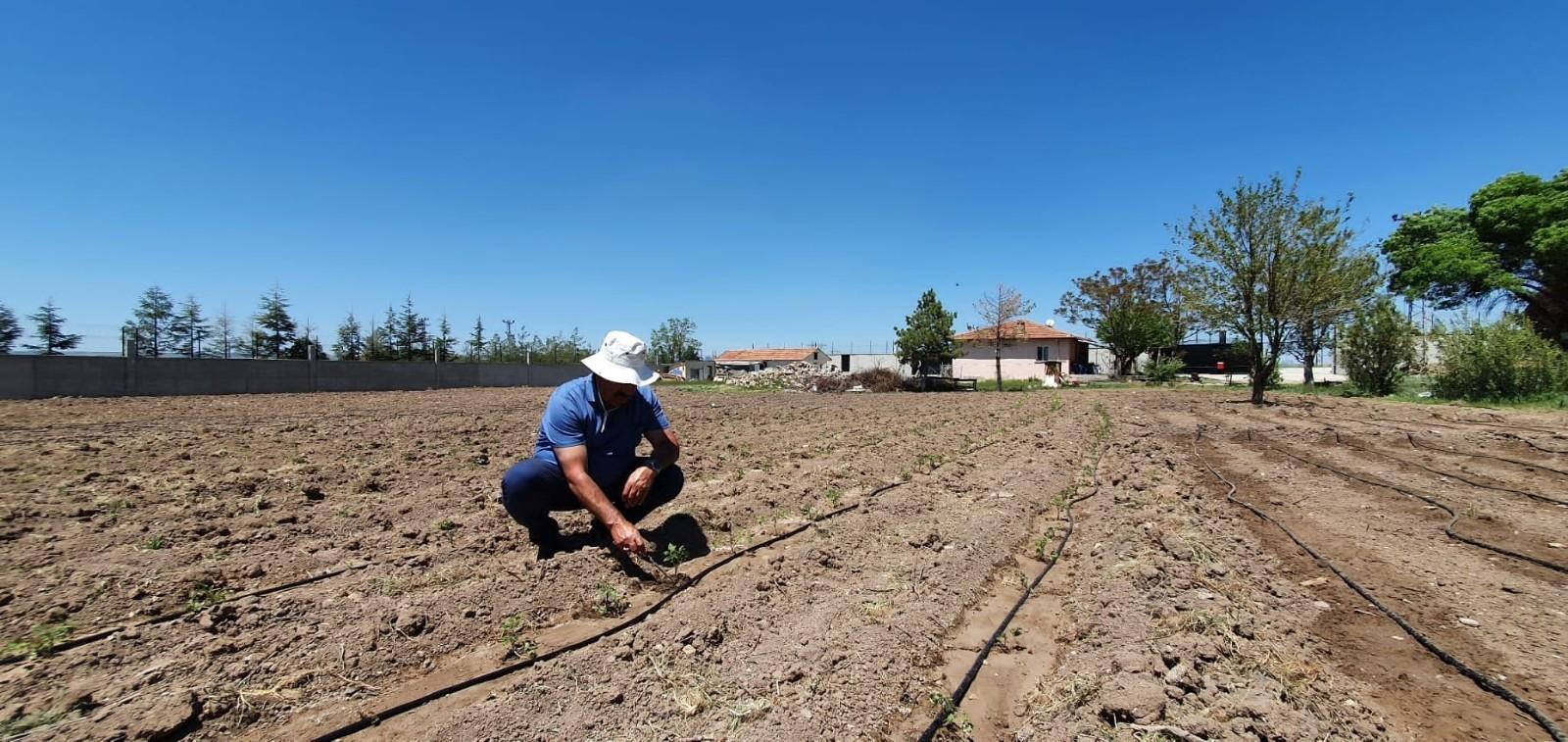 """Çelik: """"Yeni destek müjdeleri bir kez daha çiftçinin, üreticinin, yetiştiricinin yüzünü güldürdü"""""""