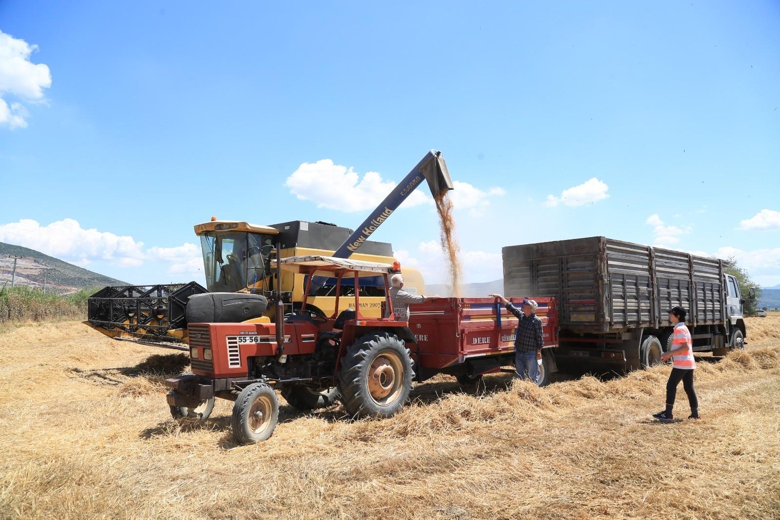 Buğday ve arpa Milas'ta çiftçinin yüzünü güldürdü