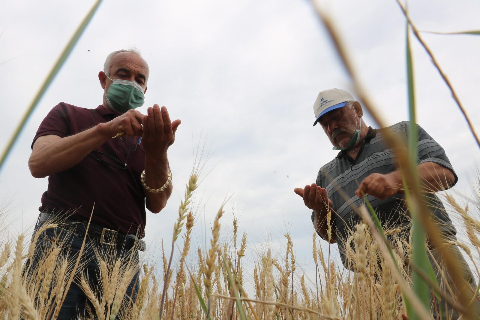 Edirne'de çiftçiler buğday harmanı sezonundan umutlu - Son dakika ekonomi  haberleri