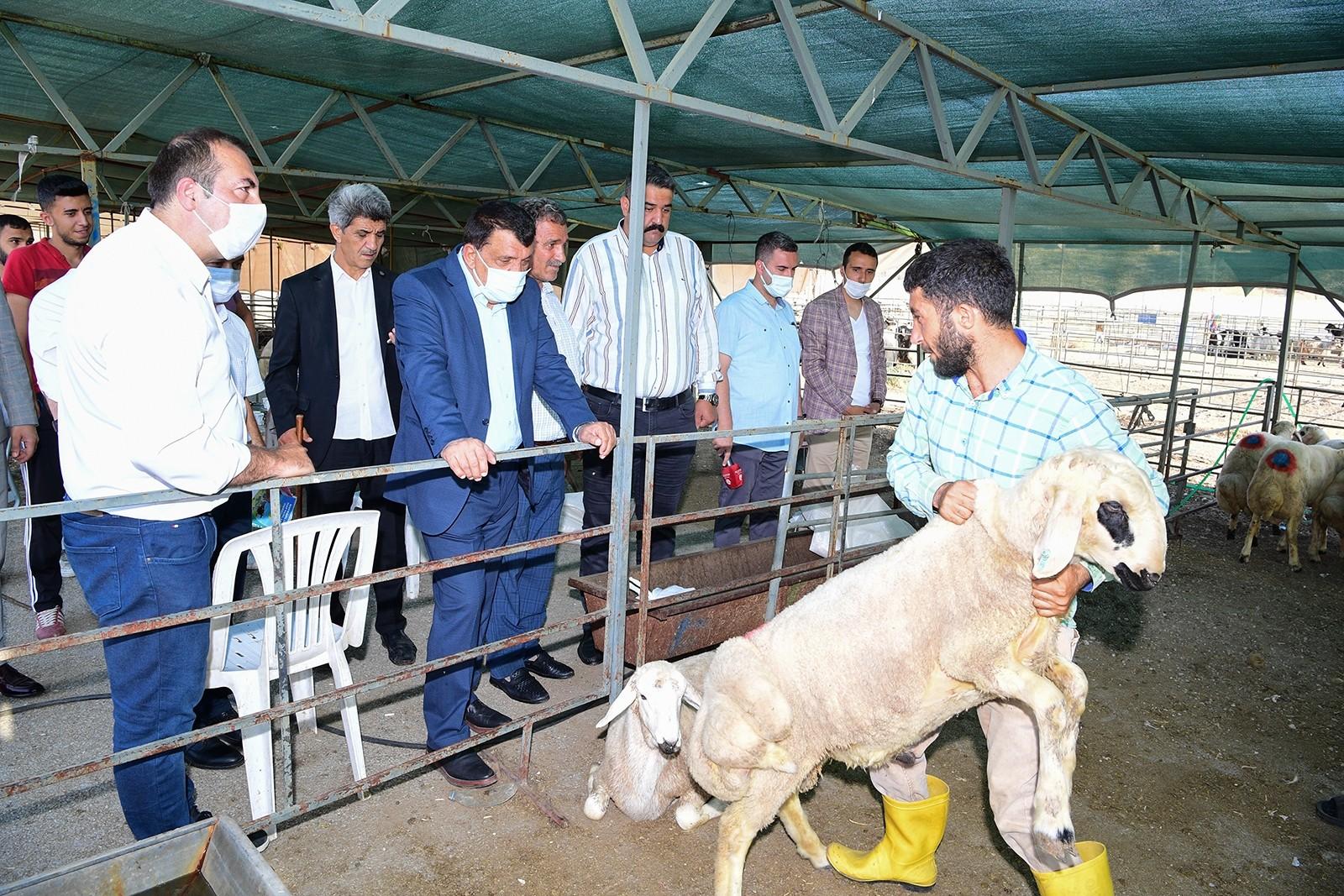 Gürkan, canlı hayvan pazarında incelemelerde bulundu