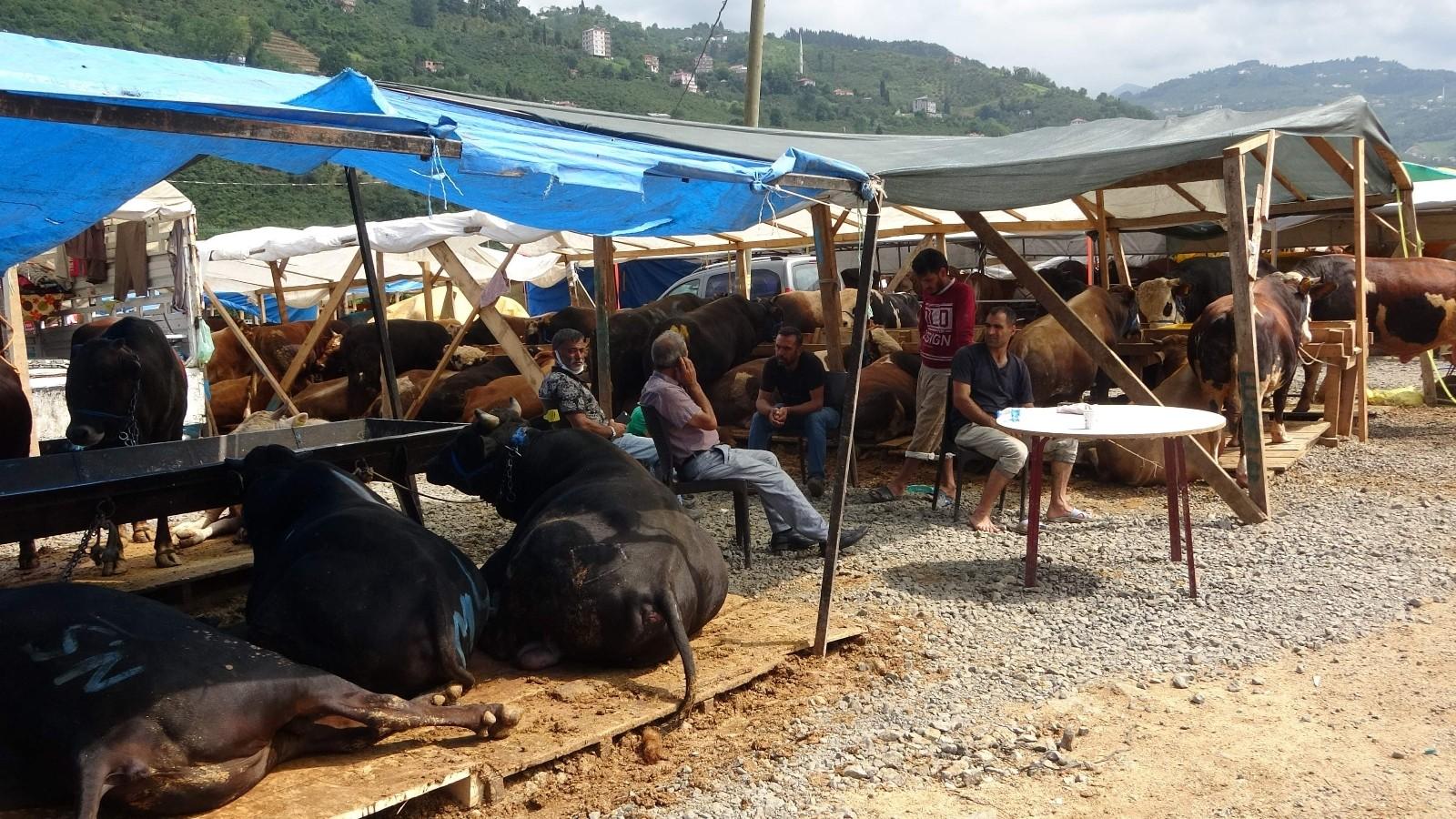 Kurban pazarının 'Paşa'sı alıcısını bekliyor