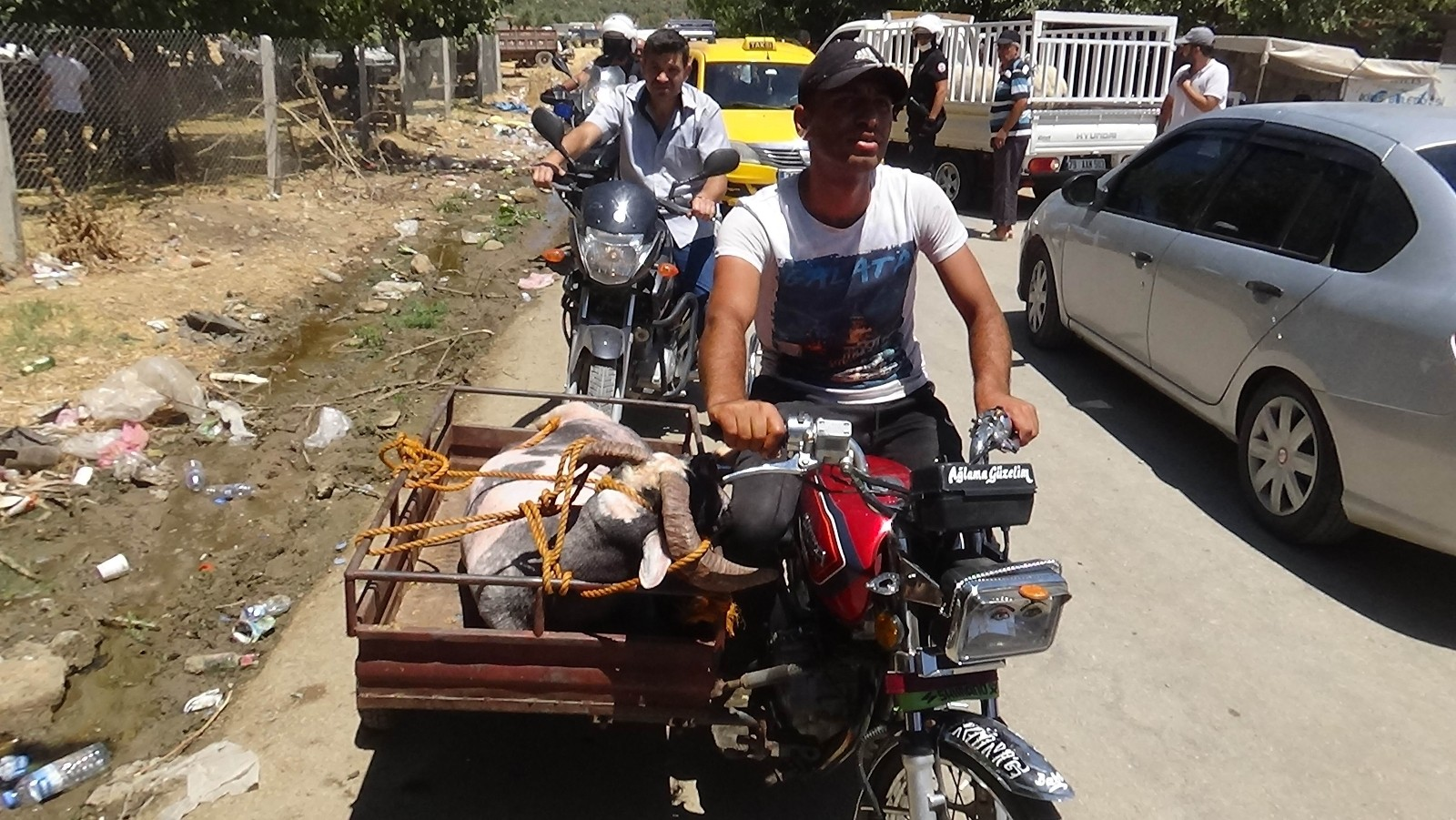 Kilis'te kurbanlıklar motosikletle taşınıyor