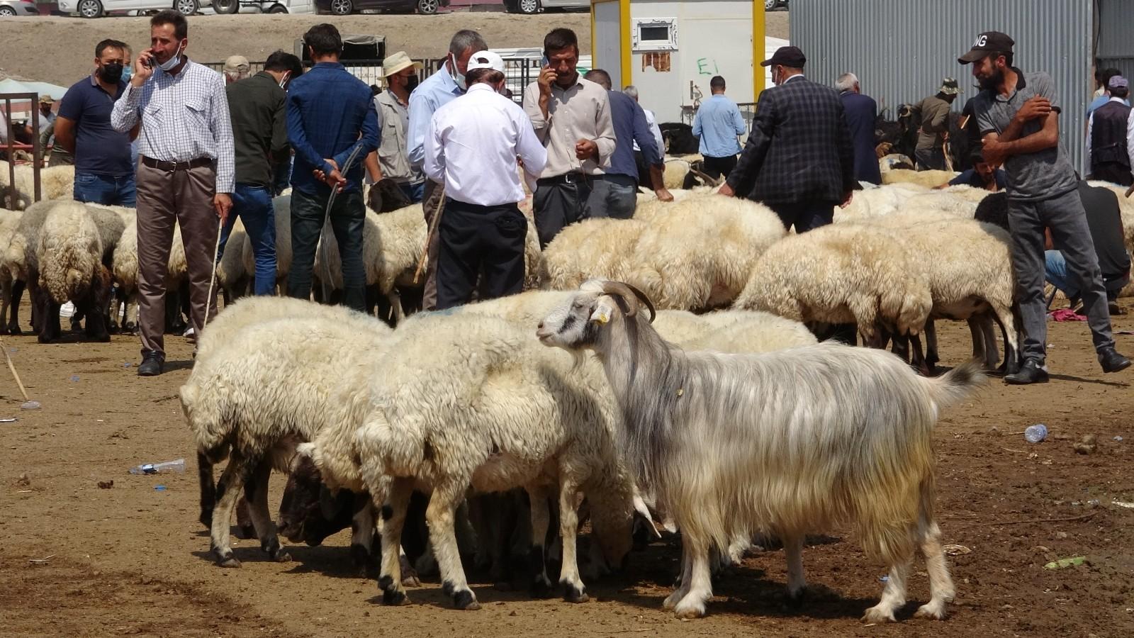 Kurban Bayramı arefesinde canlı hayvan pazarında yoğunluk arttı