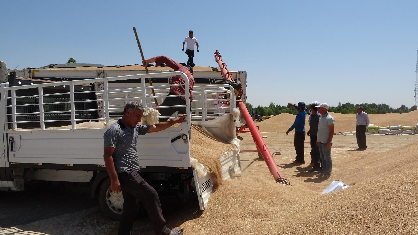 Muş'ta buğday satışları başladı