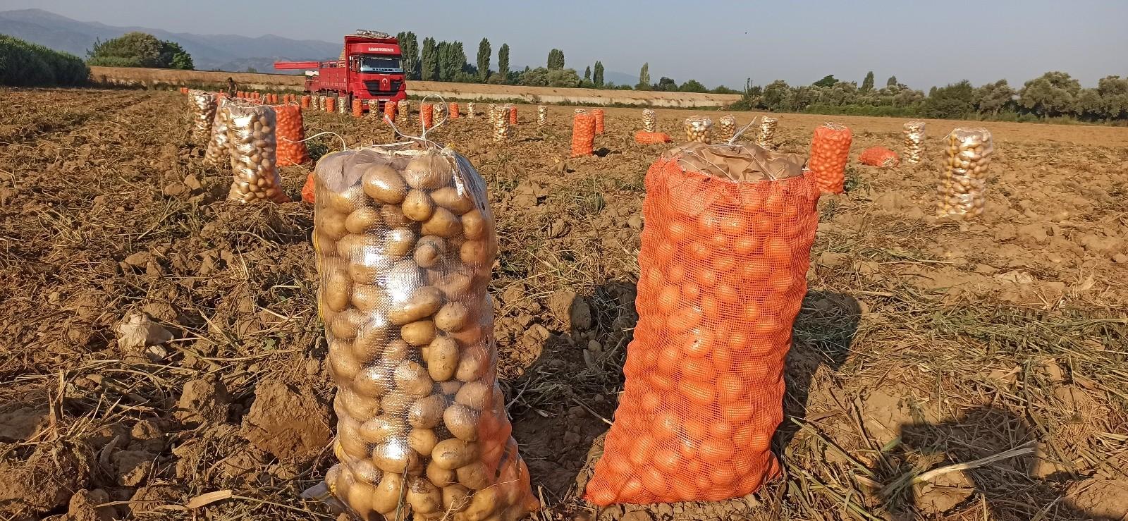 Ödemiş patatesinde ikinci ürün zamanı