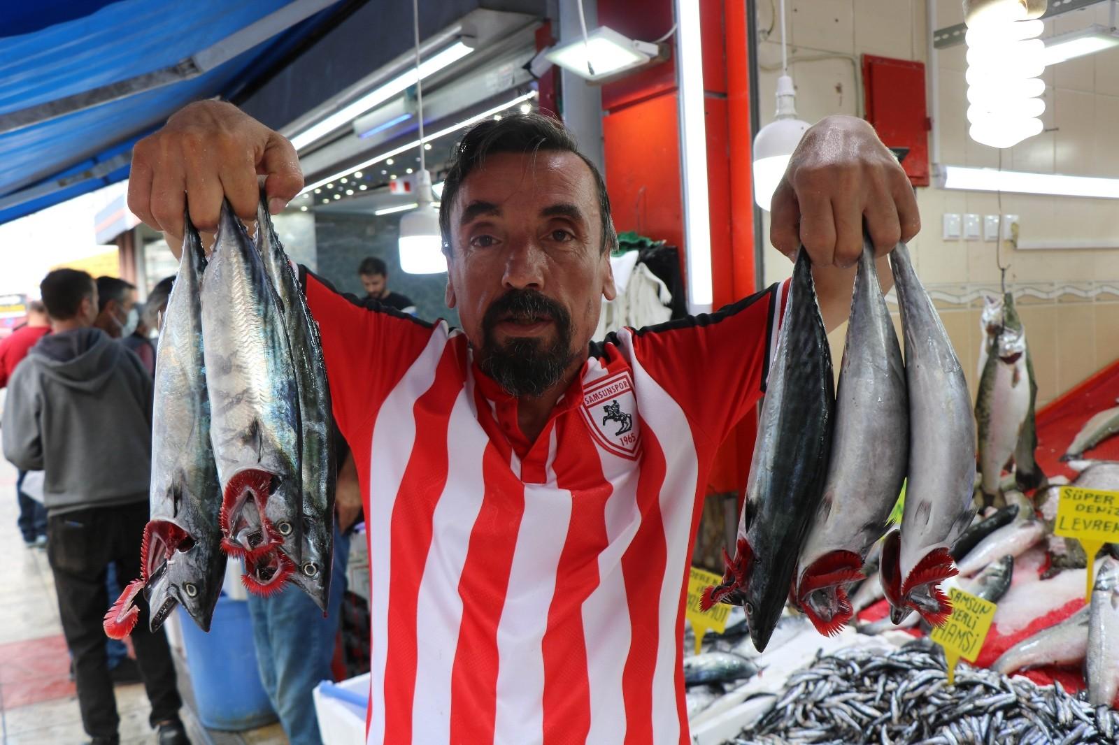 Karadeniz'in nazlı balığı palamuttan iyi haber