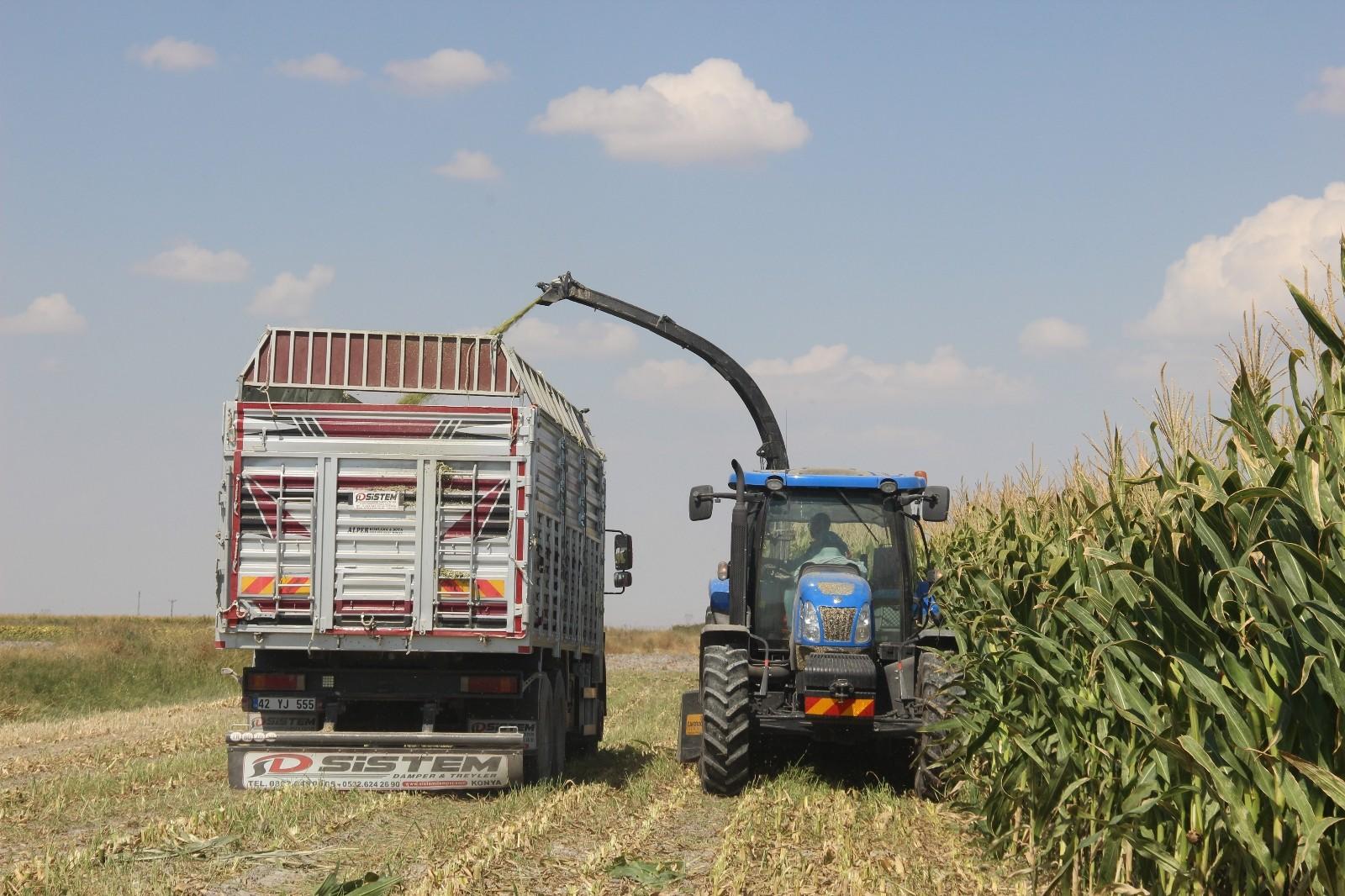 Konya Ovası'nda silajlık mısır hasadı başladı
