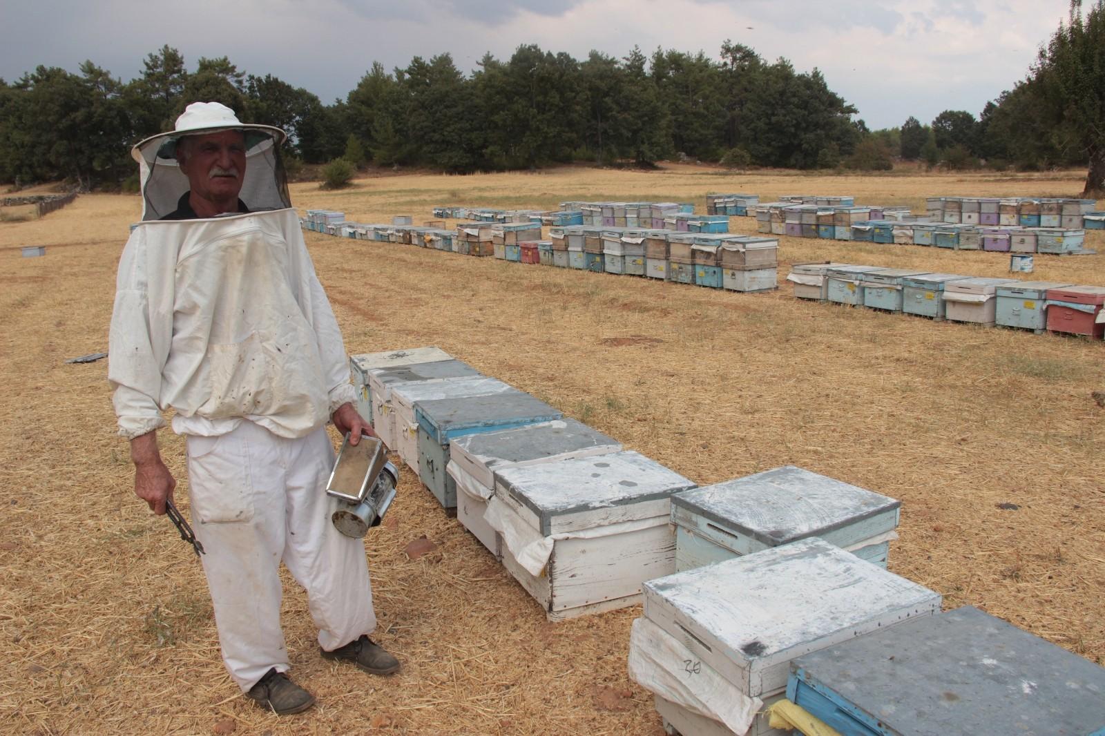 Çam balı üretimi yağmura kaldı