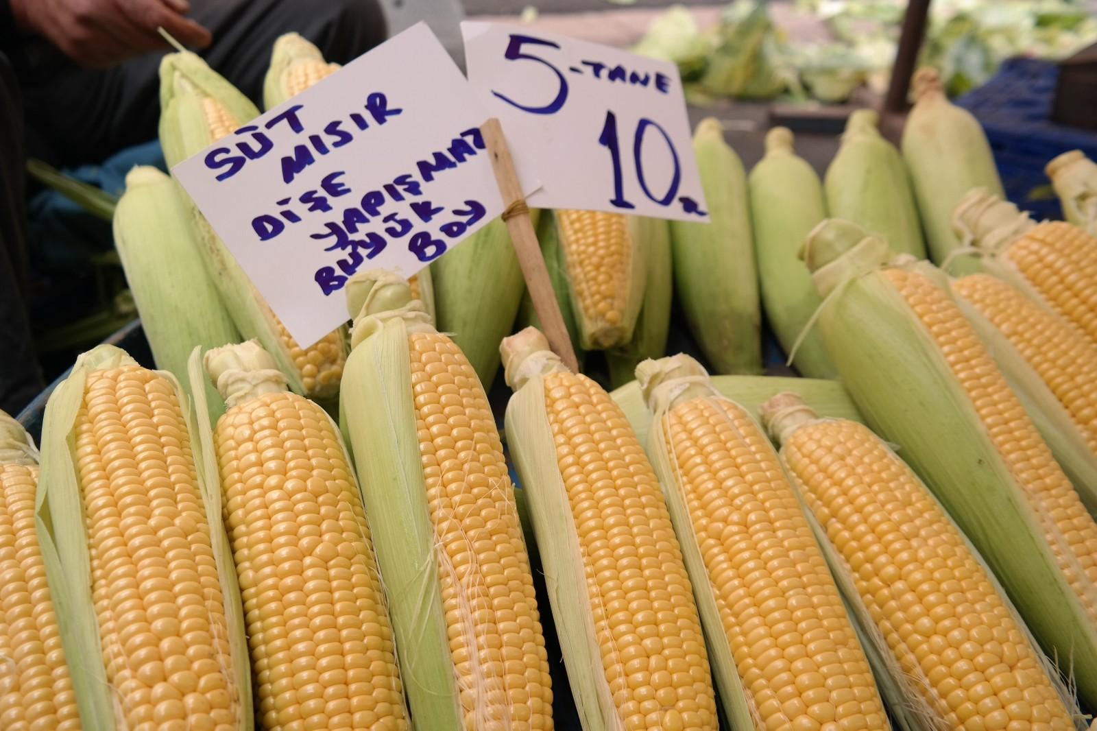 Silajlık mısır süt mısırının önünü kesti
