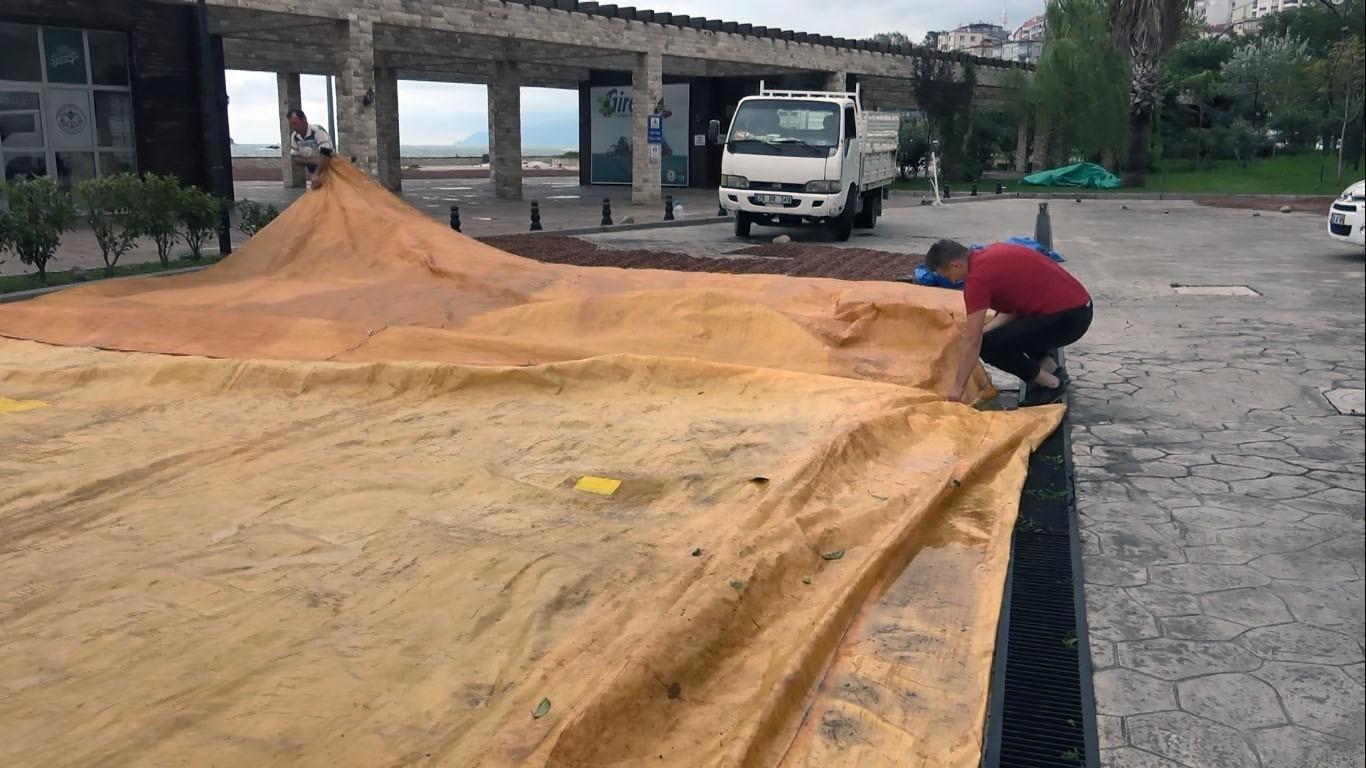 Yağışlar  fındık üreticilerini olumsuz etkiledi