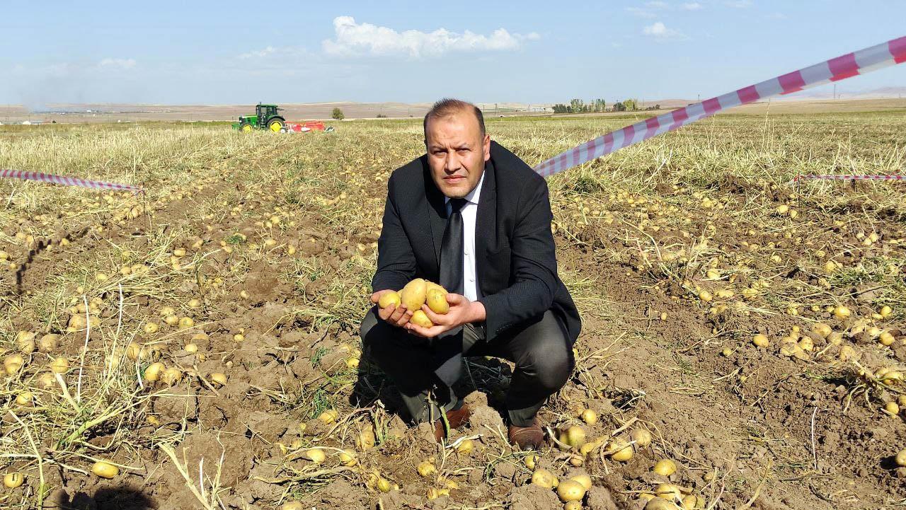Patates rekoltesinin bu yıl 5 milyon ton olması bekleniyor