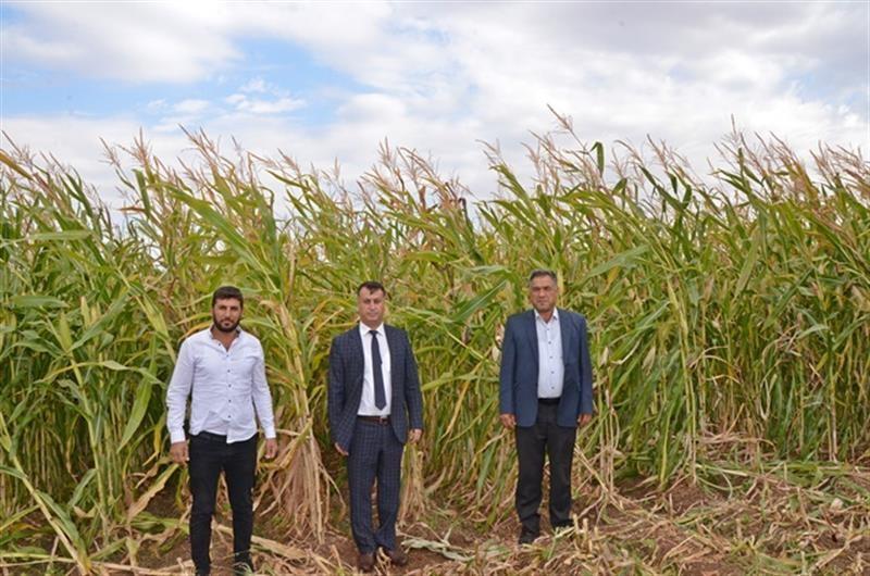 Batman'da devlet desteğiyle ekilen silajlık mısırın hasadına başlandı