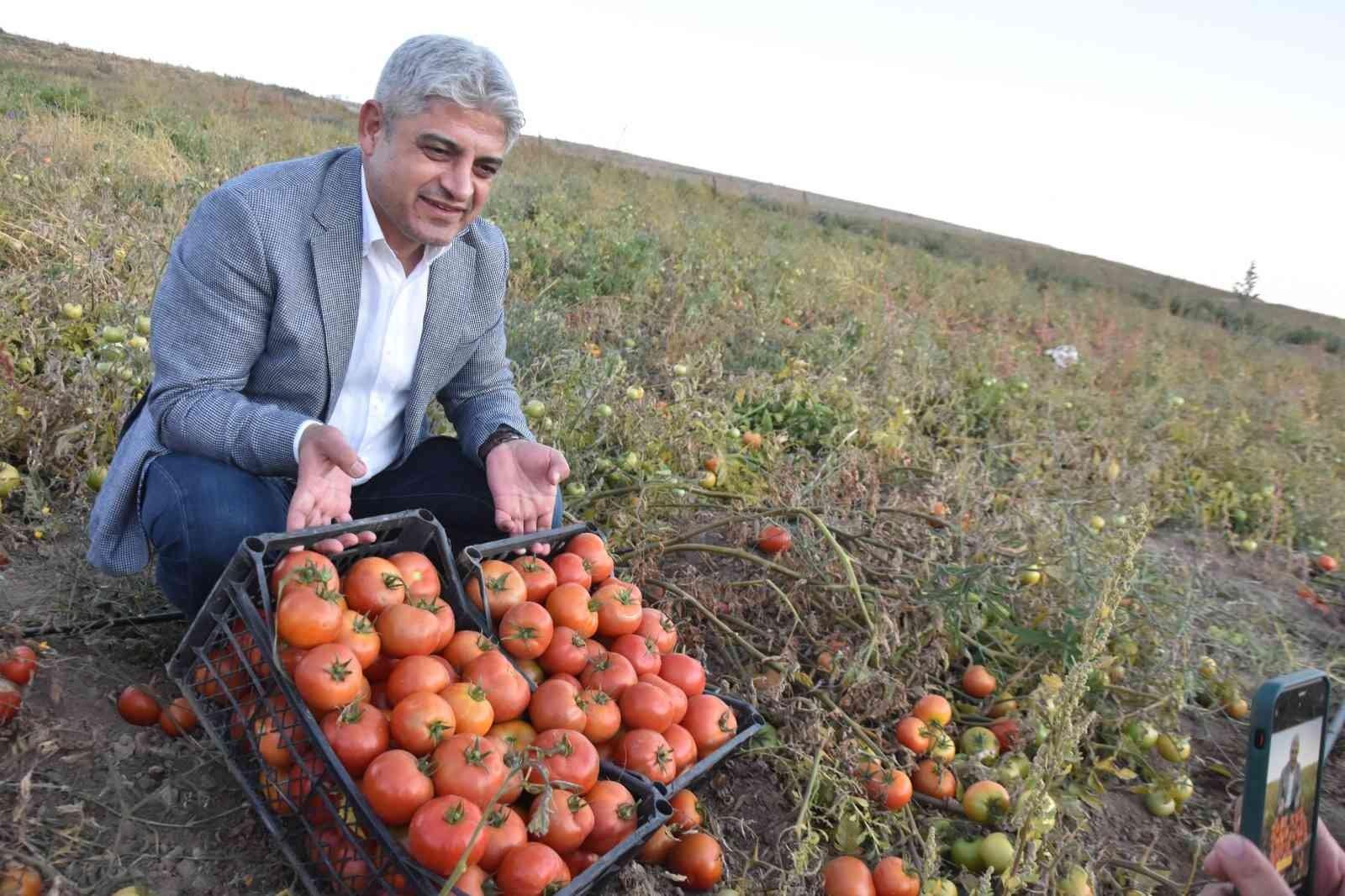 Bitlis'te 200 bin ton domatesten 400 milyon TL gelir bekleniyor